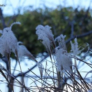 足立区都市農業公園散策は昨年初冬の時期に。