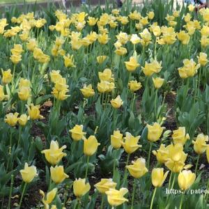 葛飾区水元公園に咲く花が躍る!