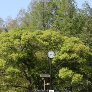 葛飾区水元公園の「緑・みどり・グリーン」が輝く!
