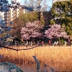 台東区上野公園界隈へお客様と散策風景に。