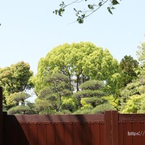新緑が美しく広がる足立区の桜花亭!