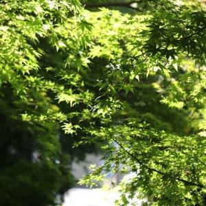 茹だるような暑さの中、足立区薬師寺散策する。