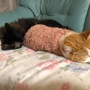 猫 いつも良く寝てる
