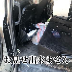 ※閲覧注意※車を本気で掃除してみた結果。