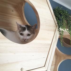 【リビングの模様替え】猫がいるからこそのインテリアを楽しみたい*