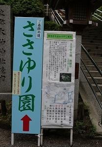 ささゆり園(大神神社:桜井市)