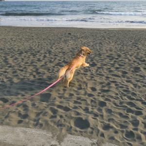 夕焼けの鵠沼海岸♪