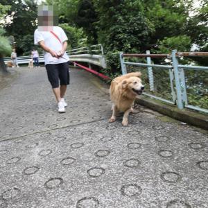 ゾロゾロお散歩♪