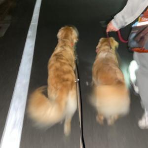 鎌倉観光案内♪