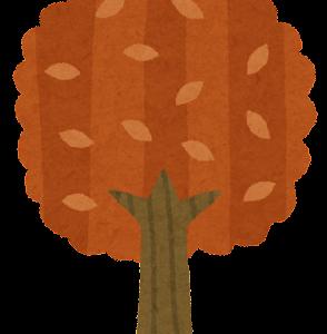 秋に起こりやすい症状と、秋の食養生