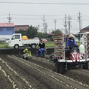 苗の植え付け作業