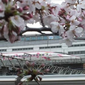 2020/3/28午前編  桜とハローキティー新幹線