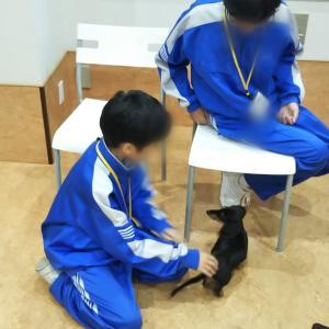 トライやるウィークと若い子(犬)の楽しい経験