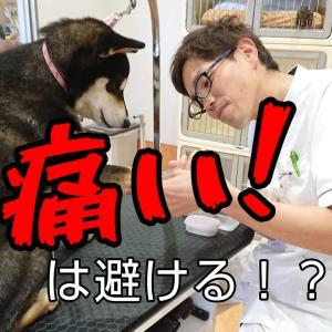 子犬の「痛い!」が抱えるトラウマとは?