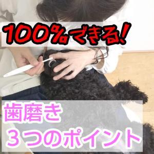 子犬が100%歯磨きできるようになる3つのポイント