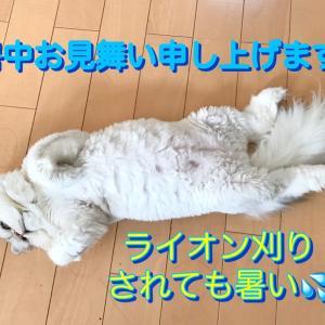 サイちゃん サリーくん ナナちゃん モフちゃん^_^