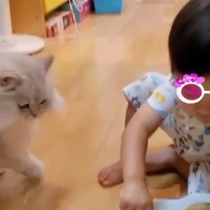 銀ちゃん ノエル4歳に^_^ ししまるくん^_^