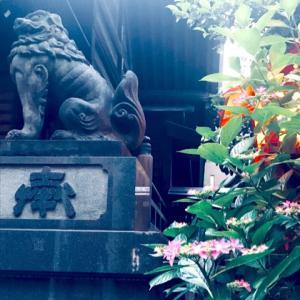 【残席1名様】オンラインサロン会員様限定<赤坂氷川神社WS>