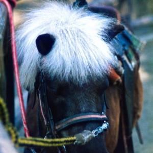 申込書届いたから日本ダービーはこの馬、いやサリオスに10万円? どうぶ…平成編①たぶんミゼットホース