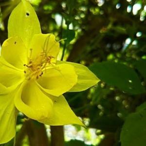 ば~ちゃんに聞いてみたんだけど、わからん花が咲いと~る・畑えもん通信
