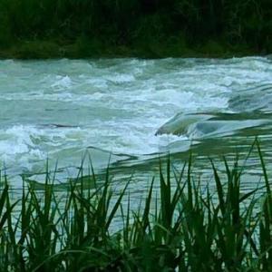 川の流れを見ているうちに「畑えもん通信」有料記事の自信がなくなってきたんであ~る