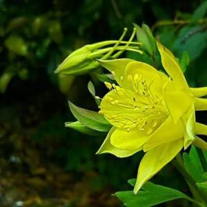 調べてもわからんかった黄色い花が咲いと~る・畑えもん通信