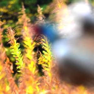 『けもの道』来春号の進捗と、狩猟で使えそうなグローブ紹介。