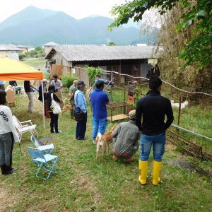 丹波猪犬訓練所。6月訓練会終了。