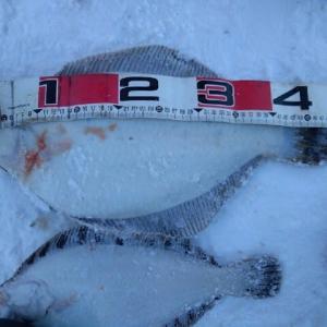 新年の釣り~偶然釣れたマコ48cm