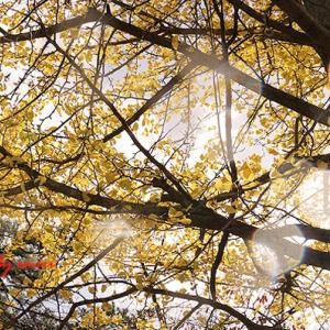 日差しを浴びて秋がほほ笑む