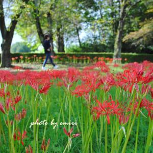 秋の公園 散歩を楽しむ人