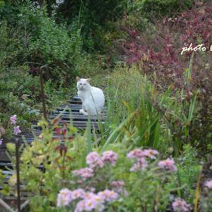 小春日和 白い猫のいる風景