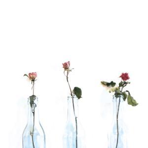 テーブルフォト 薔薇のドライフラワー