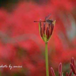 秋の虫たちの居場所