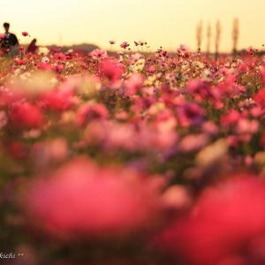 祈りと花束