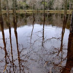 雨あがりの森。その沼。