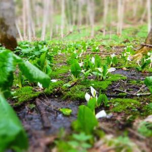 白く咲いて、緑も深まって。