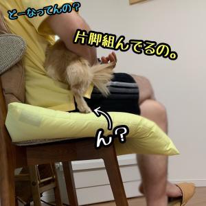 お外に行けない〜テレビ三昧〜