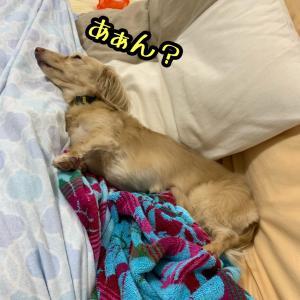 不良化〜またはフテ寝〜
