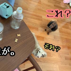 知育玩具的玩具〜ペットボトル&ネタ仕入れ中〜