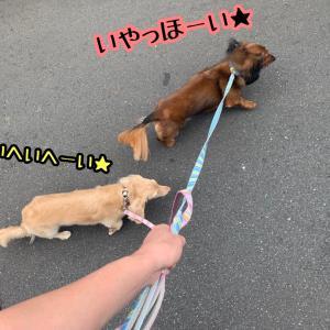 歩け歩け〜わっせっわっせっちゅっぱっちゅっぱっ〜