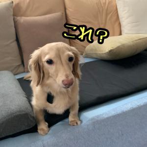 Fitbit犬〜無理矢理でも目安が欲しかった〜