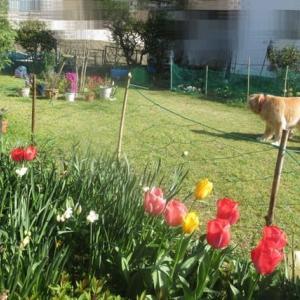 お散歩の後は 庭のお花を見てゆっくり 200406