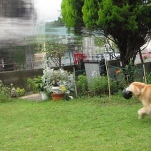 雨の合間に お父さんと遊んだよ 200612