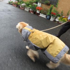 梅雨に戻りました 雨の中の散歩 200703