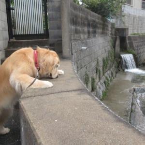 川の水が減ってきたね 200713