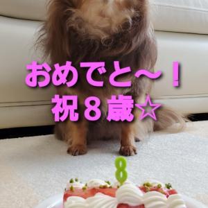 ココちん8歳☆