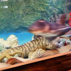 エビカニ水族館をてくてく