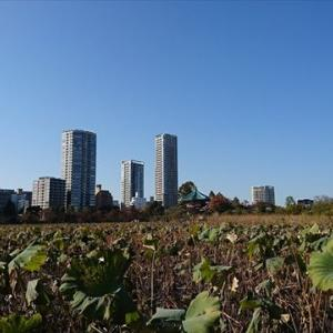 またまた上野でららら♪♪♪