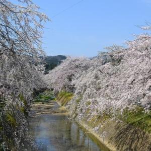 まだ間に合う!愛媛県内子町のお花見スポット